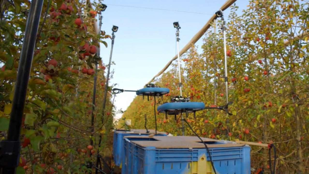 В Израиле робот собирает фрукты