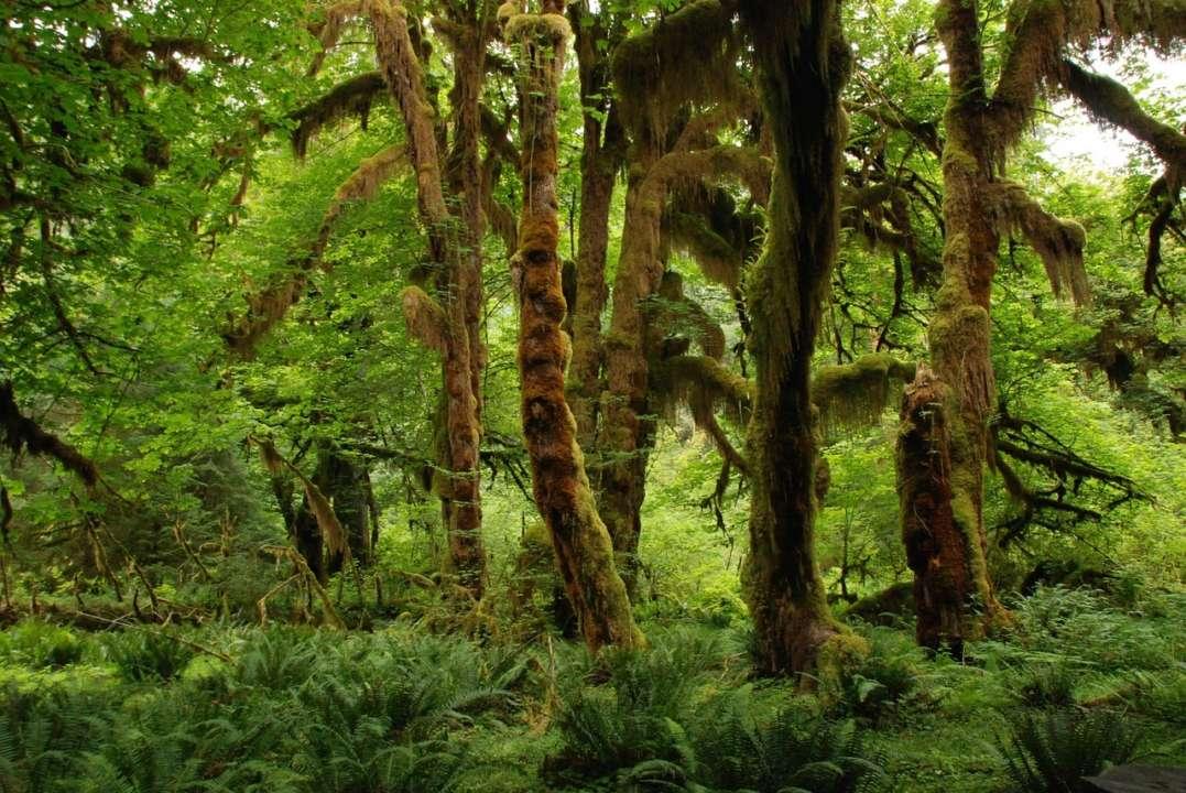 Кава допоможе відновити тропічні ліси