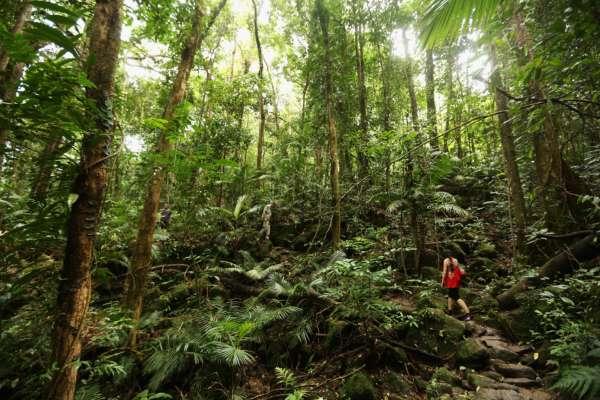72-летний британец три дня бродил по джунглях