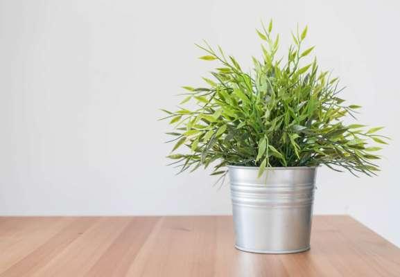 5 полезных комнатных  растений, которые помогут справиться с болезнями