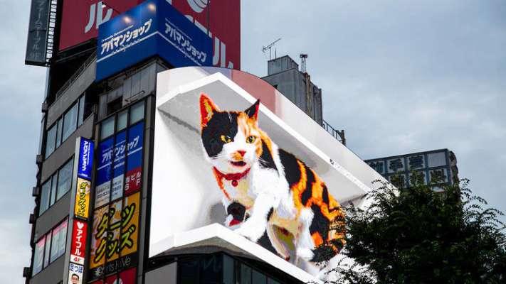 На рекламному білборді в Японії розмістили велетенського 3D-кота. Відео