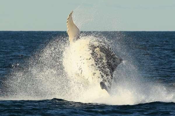 Наймиліше відео дня: в Аргентині кит лагідно підштовхнув дівчину на байдарці
