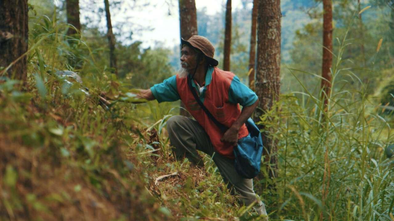 Індонезієць самотужки висадив тисячі дерев та врятував регіон від засухи