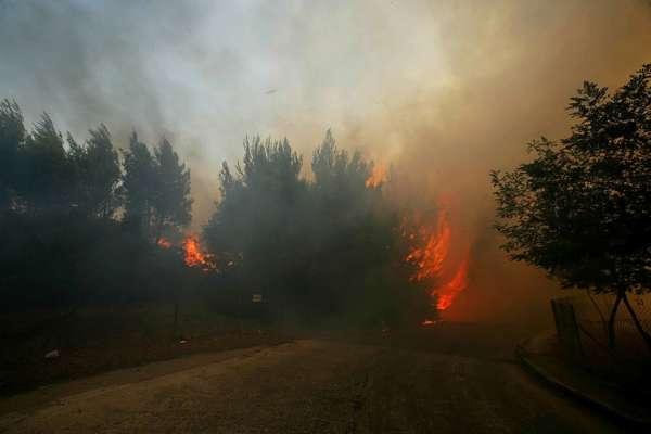 Лісові пожежі в Греції: експерти попереджають про можливу екологічну катастрофу