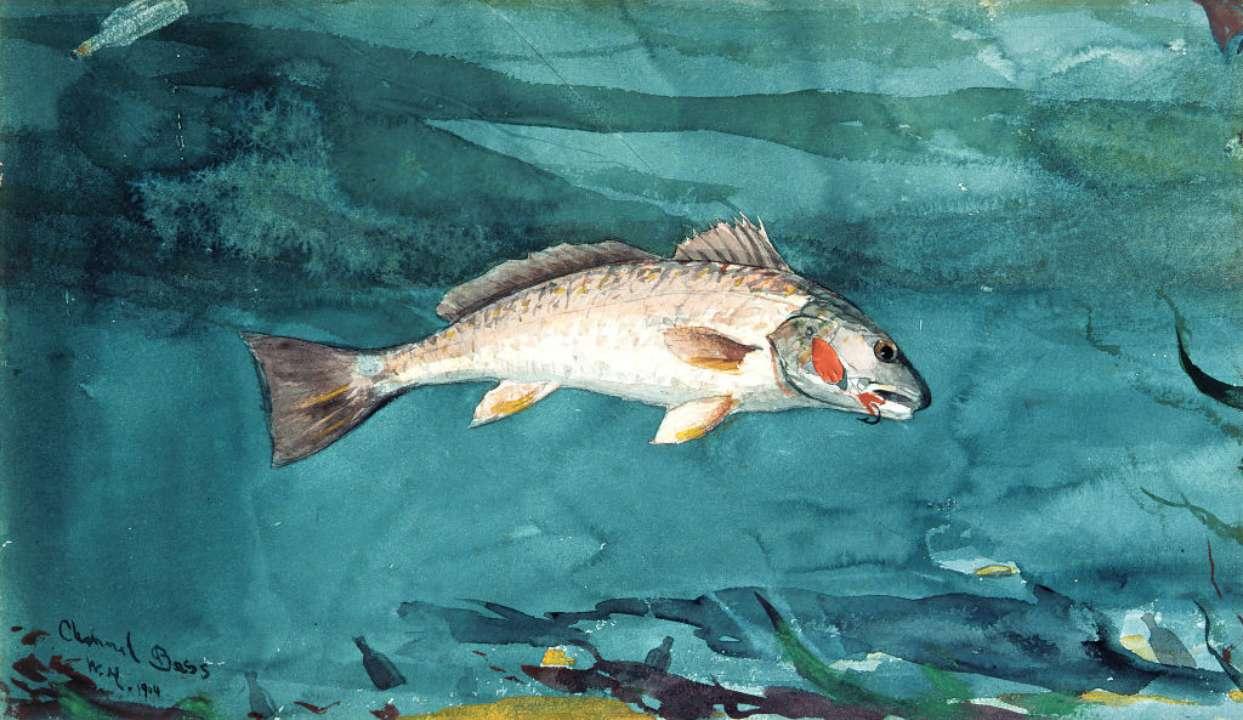 Рыба мечты: в Малайзии пойман гигантский морской окунь весом в 161 кг. Фото