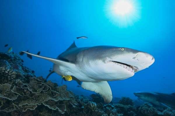 Акула выскочила из воды и откусила кусок ноги парапланеристу. Видео