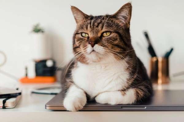 В Чикаго массово устраивают на работу котов
