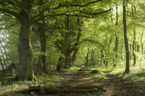 Висадка дерев збільшує кількість дощів на 7,6% — вчені