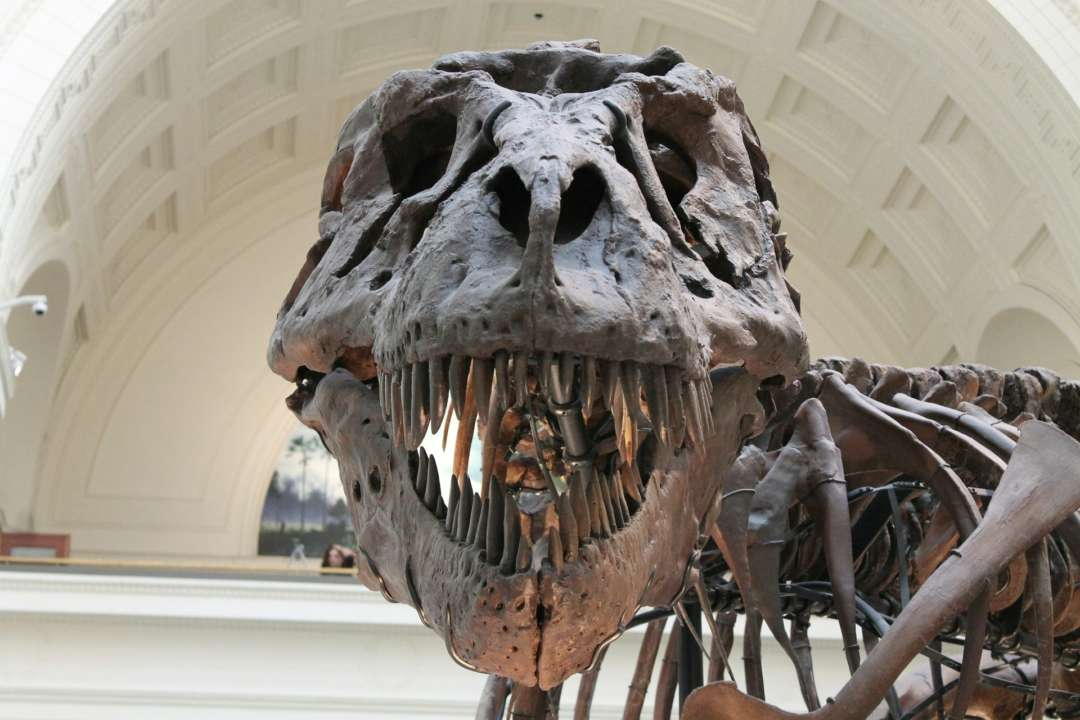 Ученые нашли остатки астероида, который уничтожил динозавров