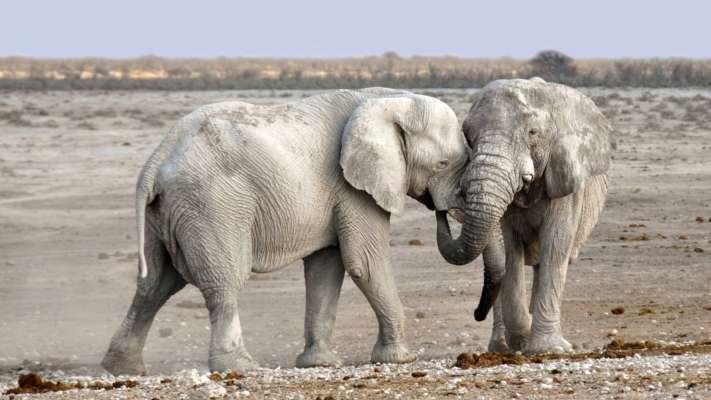 У Кенії дізнаються, які види тварин знаходяться під загрозою зникнення