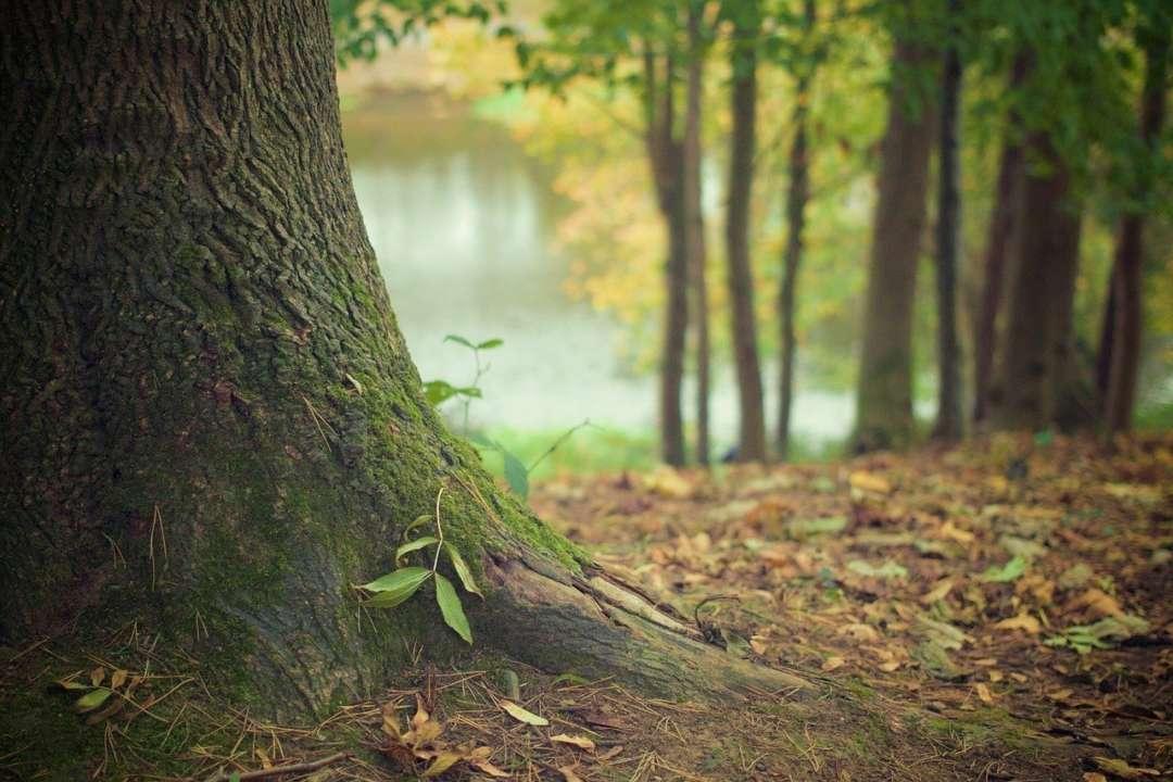 IKEA  викупила ліс в США заради збереження екології