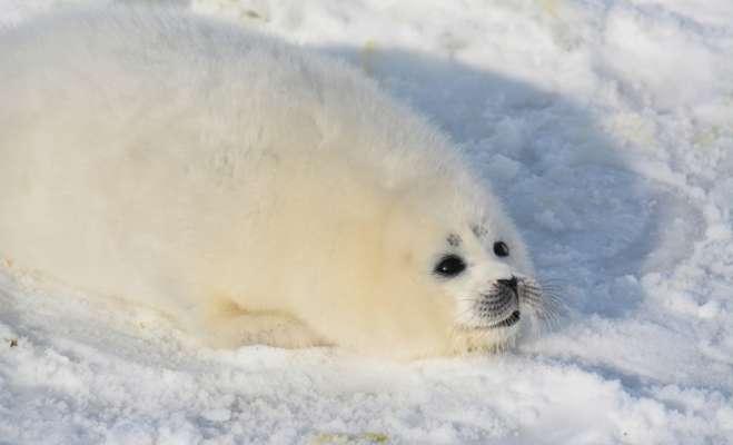 На березі Каспію знайшли понад 150 мертвих червонокнижних тюленів