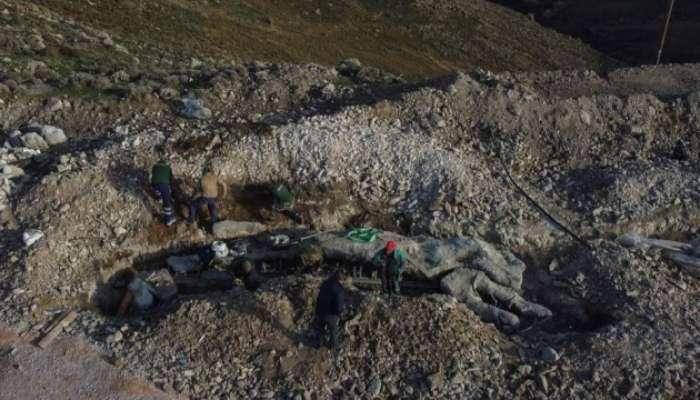 На грецькому острові знайшли скам'яніле дерево, якому 20 мільйонів років