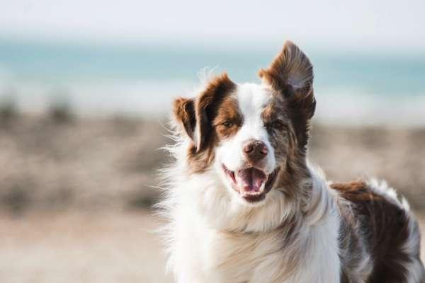 собаки умеют распознавать обман