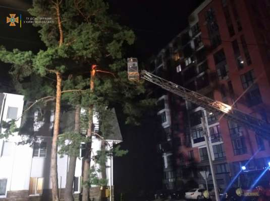Кошачий спасатель: в Ирпене парень застрял на дереве при попытке достать животное