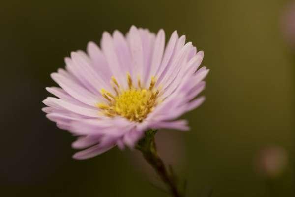Одеський ботанічний сад показав осіннє цвітіння рослин
