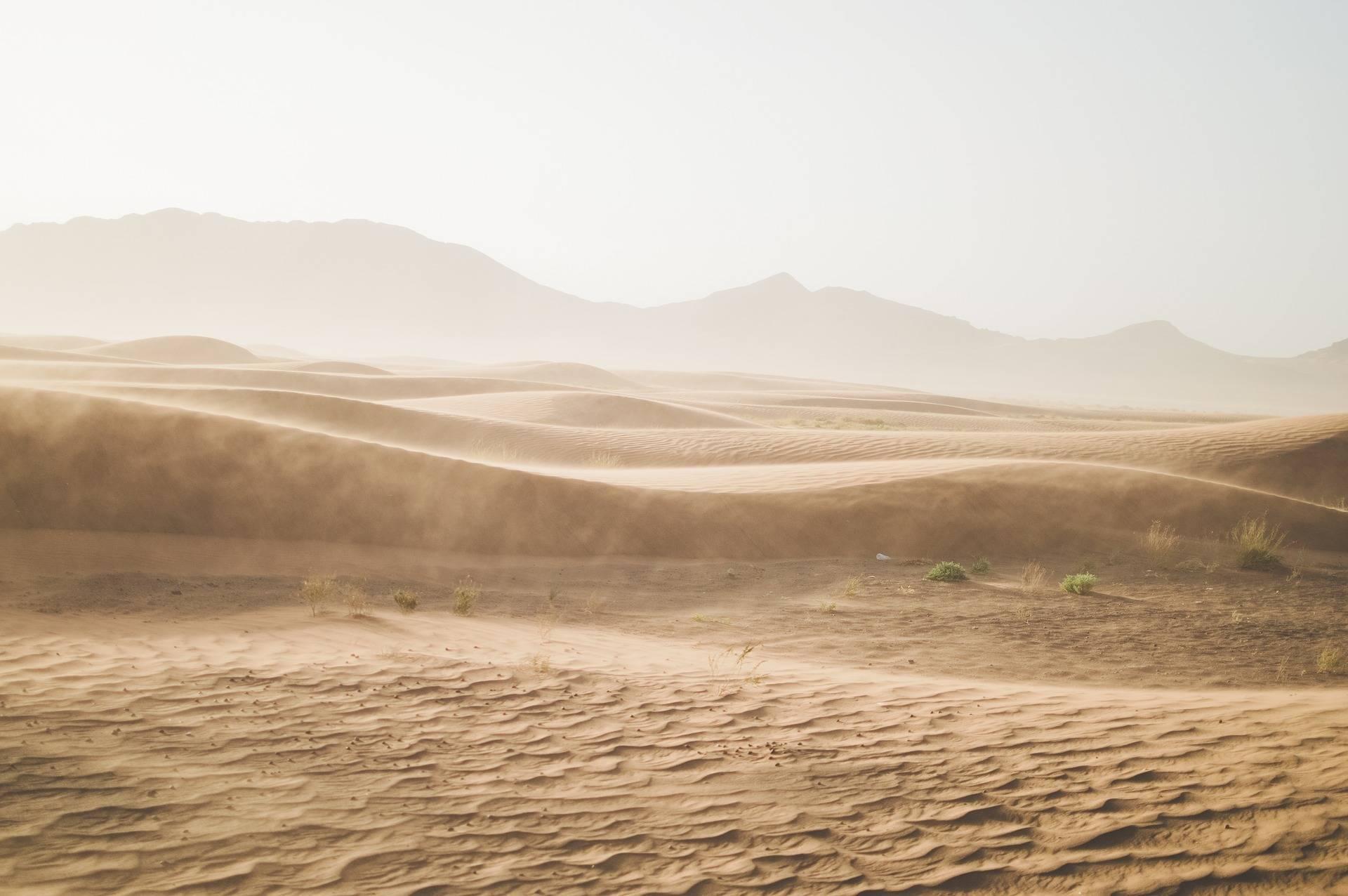 Степова зона в Україні через 30 років може перетворитися на пустелю - прогноз ученого
