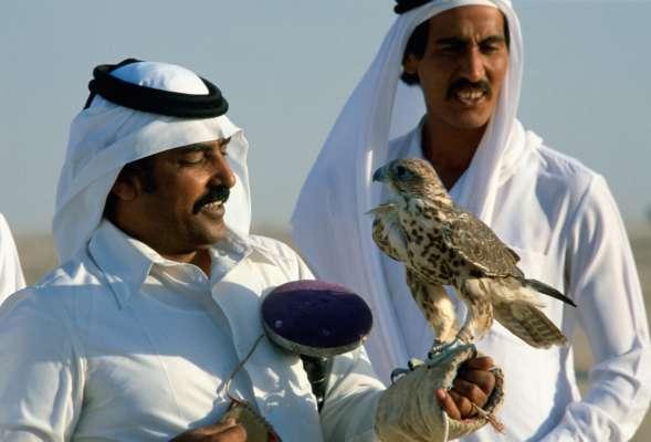 На аукціоні у Саудівській Аравії продали сокола за рекордну суму