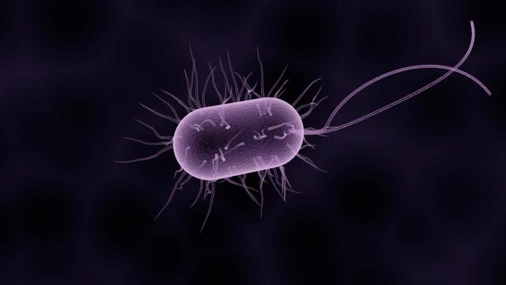 Японские ученые обнаружили у долгожителей уникальные бактерии, которые уменьшают риск развития болезней