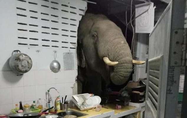 Голодный слон проломил стену дома в поисках еды