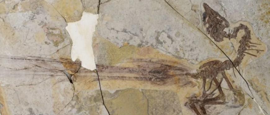 Вчені виявили останки динозавра, схожого на сучасних голубів