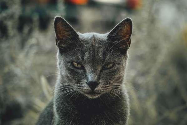 Топ-5 речей, які дратують вашого кота