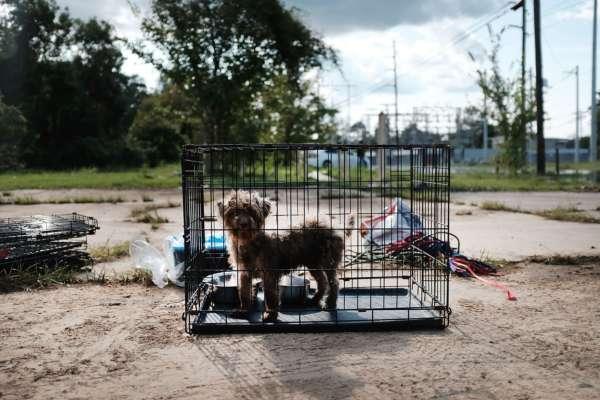 У Південній Кореї хочуть заборонити їсти собак