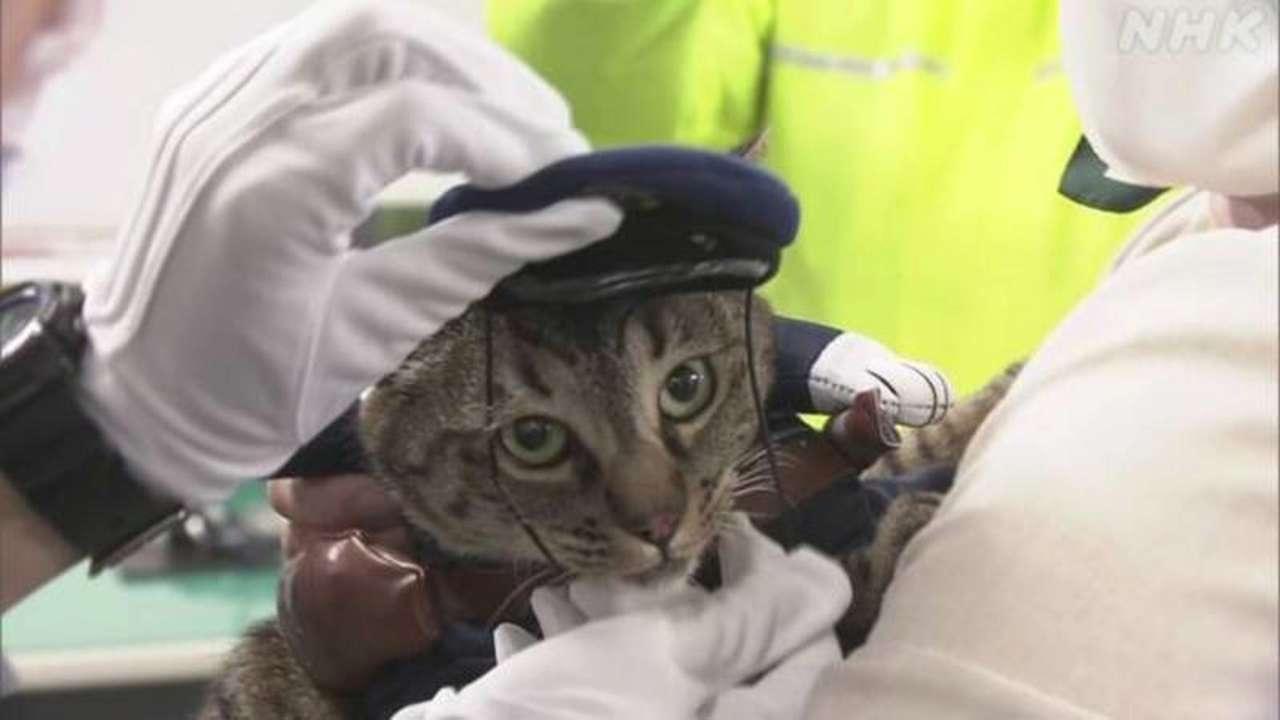 В Японии кота  назначили главой отдела полиции
