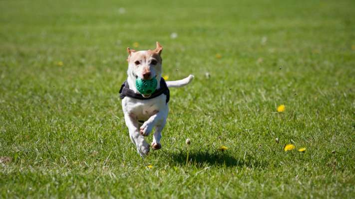У Харкові пройшов конкурс талантів і чарівності серед безпородних собак
