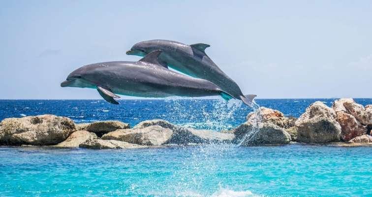 Вчені розповіли про загальні риси характеру людей і дельфінів