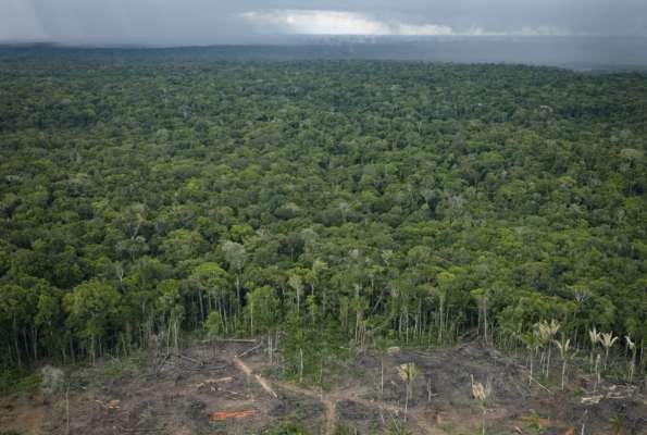 Тропічні ліси Амазонії виділяють більше вуглекислого газу, ніж поглинають – дослідження