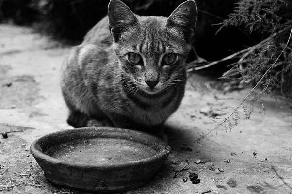 Кошка не перестает благодарить людей, которые ее спасли
