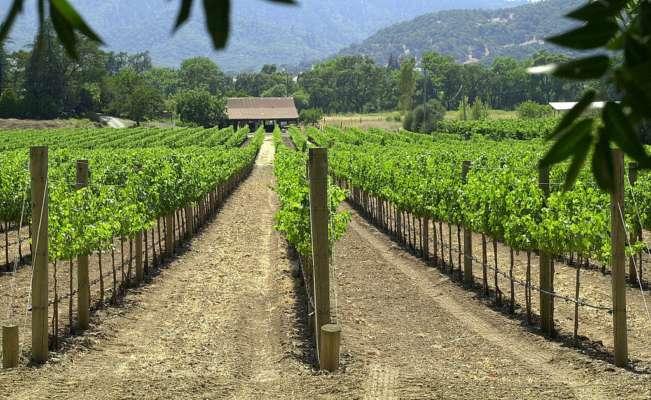 Каліфорнійські винороби пропонують 10 тисяч за любов до вина