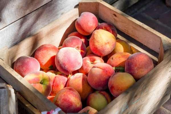 4 факта о персиках