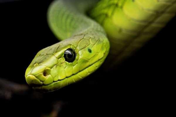 Науковці розповіли, чому змії пережили динозаврів