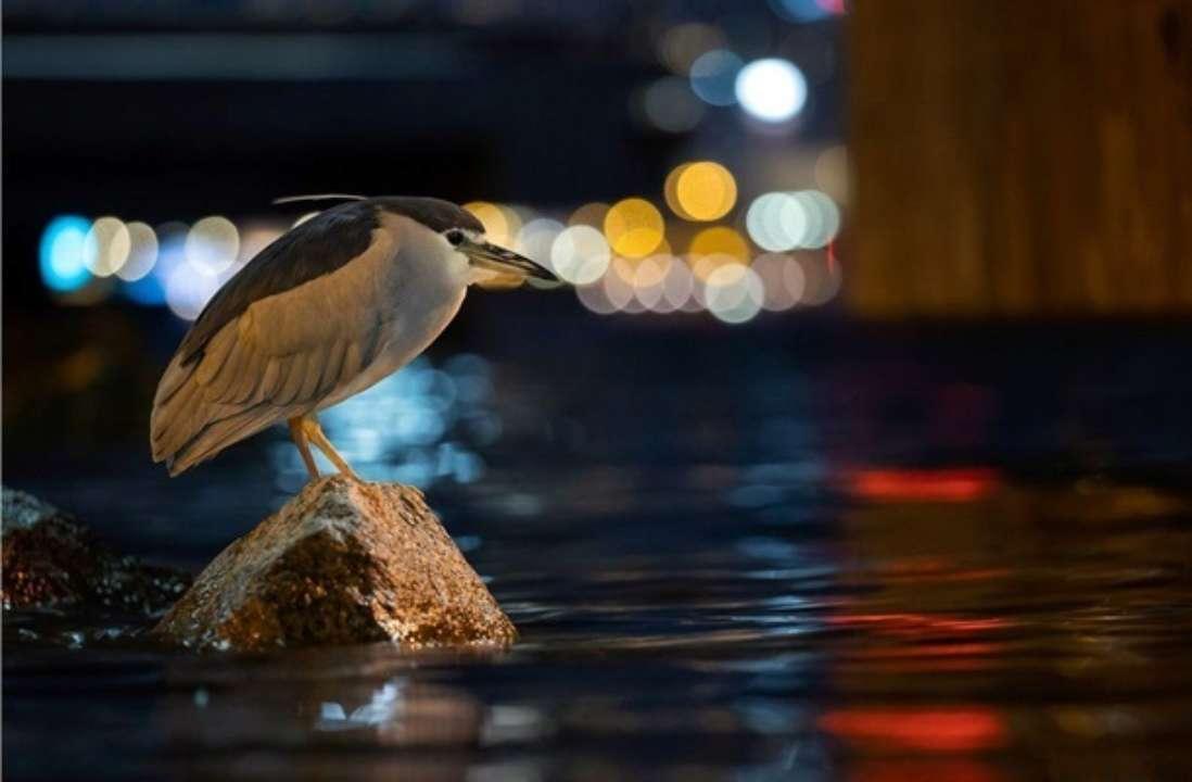 Птиця