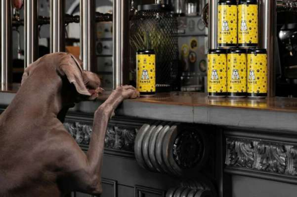В Італії можна буде випити пива зі своїм собакою: для тварин створили спеціальний напій