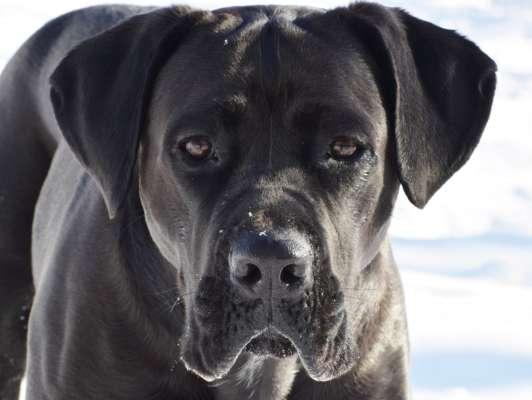 На Донеччині дві собаки загризли чоловіка