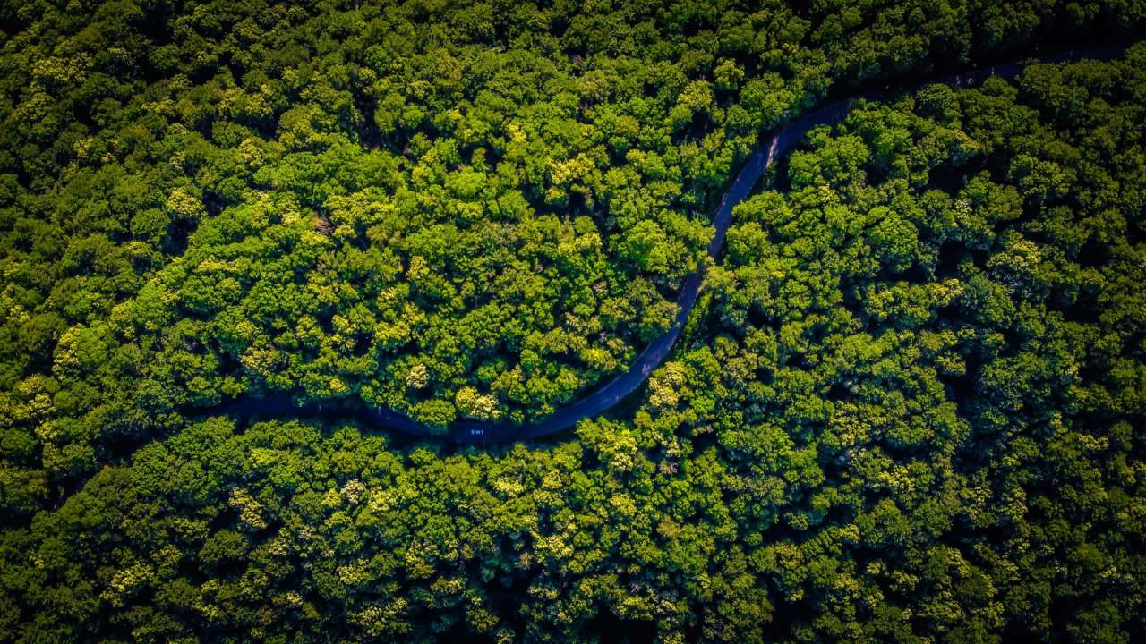 Земля уже втратила дві третини тропічних лісів — дослідження
