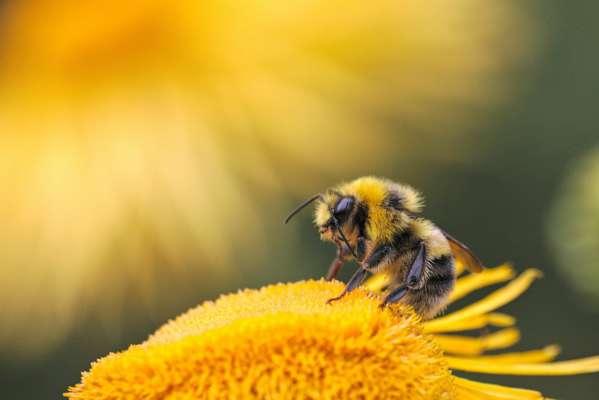 Изобретательные насекомые: две пчелы самостоятельно открыли бутылку со сладким напитком. Видео