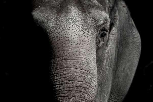 Слониха подала до суду на зоопарк через погані умови утримання