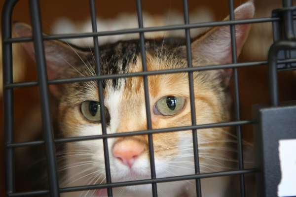 У США кіт втік з літака і 3 тижні ховався в аеропорті