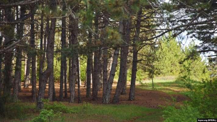 За рік в Україні вирубали лісу на майже 450 мільйонів