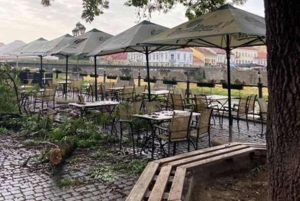 В Ужгороді на голови відвідувачів кафе впала гілка, розміром з невелике дерево. Відео