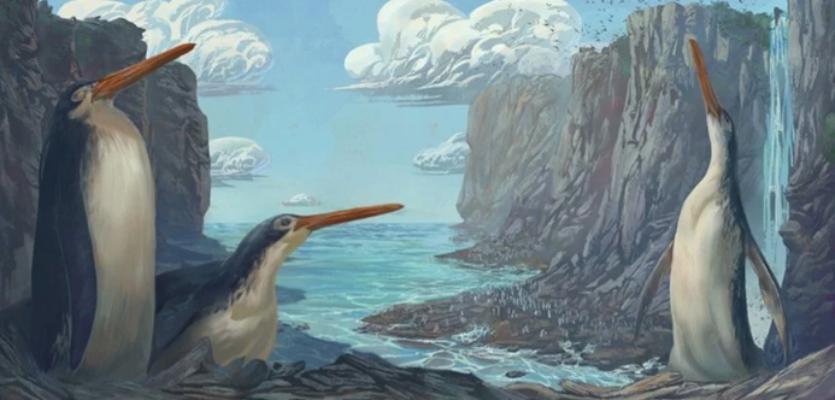 У Новій Зеландії школярі знайшли останки невідомого вимерлого виду пінгвінів