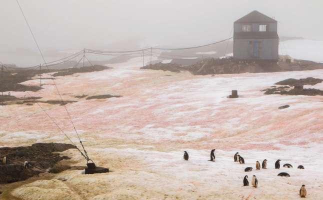 В Антарктиде порозовел снег