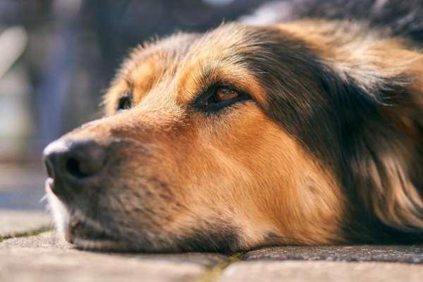 Верная собака: на Львовщине пес месяц ждет хозяина, который выбросил его на улицу