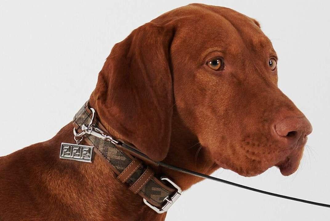 Fendi выпустил модную коллекцию для собак