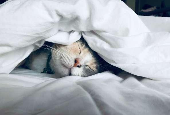 секрети здорового сну