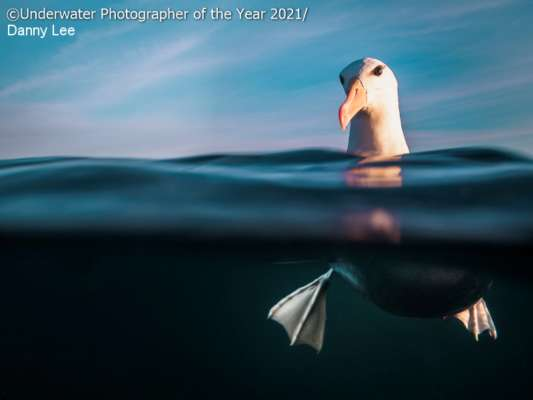 Це потрібно бачити: кращі підводні фотографії 2021 року